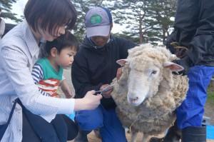 ☆羊の毛刈り